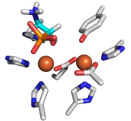 PhnZ active site